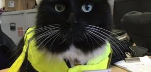СЛЕД 5 ГОДИНИ СЛУЖБА: Повишиха котката, която работи на гарата (ВИДЕО+СНИМКИ)