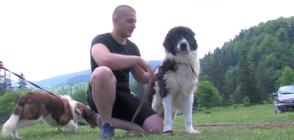 Български овчарски кучета дефилираха на изложба в Нова Махала (ВИДЕО)