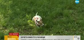 Стопани на домашни кучета превзеха училищен двор
