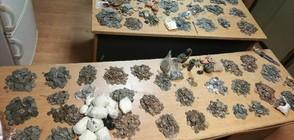 Митничари задържаха над 11 000 старинни монети, пръстени и фигурки (СНИМКА)