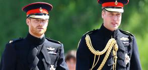 Любопитни факти за принц Уилям (СНИМКИ)