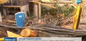 ЗАРАДИ ПАДНАЛО ДЪРВО: Стотици семейства без ток във Варна
