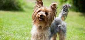 Мъж получи право да вижда кучето си след развод
