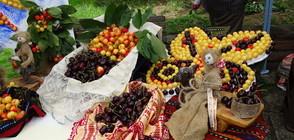 Гигантска торта и награди на Празника на черешата в Кюстендил (ВИДЕО+СНИМКИ)