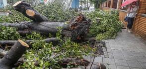 """Мощният тайфун """"Мария"""" продължава да сее хаос в Източна Азия (СНИМКИ)"""