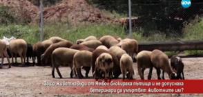 Защо животновъди от Ямбол блокираха пътища?