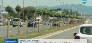 ВАНДАЛСКА ПРОЯВА: 29 отрязани дървета на Околовръстния път в София