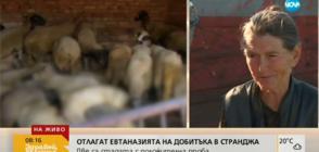Баба Дора: Няма да дам стадото си, лъжат, че е заразено