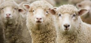 Изплащат обезщетенията за евтаназираните животни в Шарково
