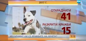 Зачестяват случаите на кражби на кучета