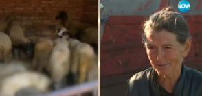 Евтаназираха стадото на баба Дора от Шарково