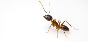 Мравка се опита да открадне диамант (ВИДЕО)