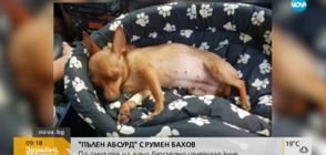 """""""ПЪЛЕН АБСУРД"""": По следите на едно безследно изчезнало куче (ВИДЕО)"""