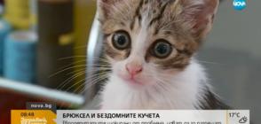 Евродепутатите шокирани от проблема с бездомните животни у нас