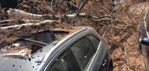 Дърво премаза две коли в центъра на София (ВИДЕО+СНИМКИ)