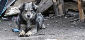 Близо 3600 безстопанствени кучета в София