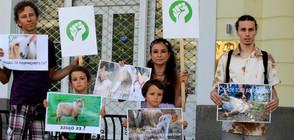 Вегани протестираха пред Главното мюфтийство в София (ВИДЕО)