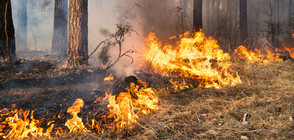 Локализираха пожара край Баня (ВИДЕО)
