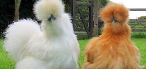 ЧУДО НА ПРИРОДАТА: 20 животни със забавни прически (ГАЛЕРИЯ)