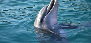 Почина най-възрастният делфин, отглеждан в зоопарк