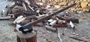 Искат постоянен арест за задържаните за незаконен добив на дърва