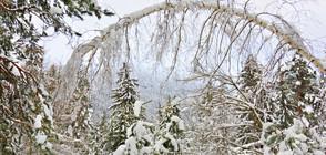 ПРОГНОЗА: Първият сняг у нас ще падне до седмица