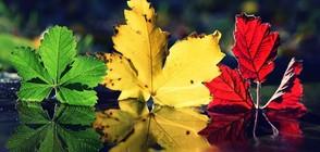 Настъпи астрономическата есен! (ГАЛЕРИЯ)