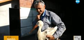 Спасителят на щъркели Сафет отглежда птица, ранена при токов удар