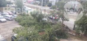 Бурният вятър събори дървета, остави 8000 домакинства без ток (ВИДЕО)