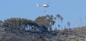 Заради пожара край Пиза: Отмениха десетки полети