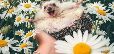 19 снимки, които ще ви накарат да се усмихнете (ГАЛЕРИЯ)