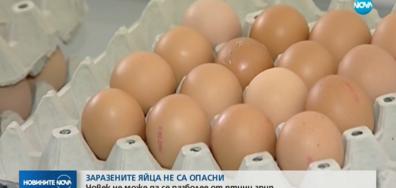 Кантарджиев: Птичият грип не е опасен за хората