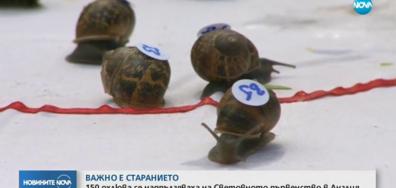 150 охлюва се надпълзяваха на Световното първенство в Англия