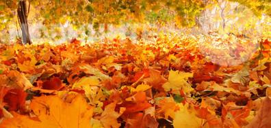 20 доказателства, че есента е най-цветният сезон (ГАЛЕРИЯ)