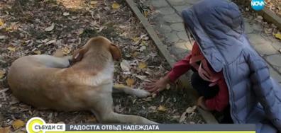 Дете се опитва да събере 500 кг пластмасови бутилки, за да помогне на бездомните животни