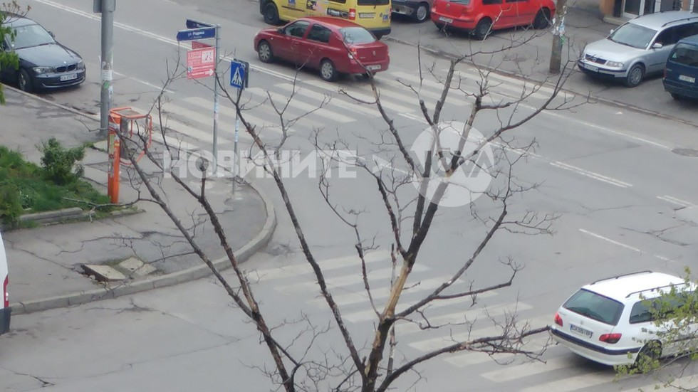 Опасно изсъхнало дърво