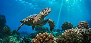 Учени ще изстрелват сол в небето, за да спасят кораловите рифове