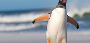 """Oчаквайте в """"Темата на NOVA"""": Тайните на Антарктида (ВИДЕО)"""