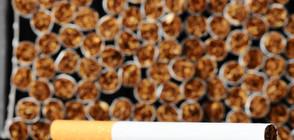 КОНТРАБАНДА НА ЦИГАРИ: Тютюневи компании отчитат нивата й