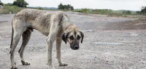 Английско семейство спасява болни и ранени бездомни кучета у нас (ВИДЕО)