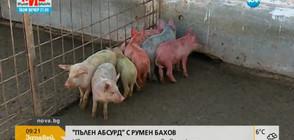 """""""Пълен абсурд"""": Цветни прасета се родиха в свинеферма (ВИДЕО)"""