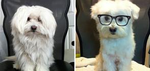 Кучета преди и след фризура (ГАЛЕРИЯ)