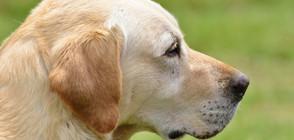 Арест за убийството на куче, цяло село на бунт срещу стопаните му