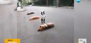 Куче прескача други кучета (ВИДЕО)