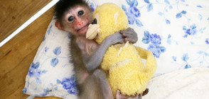 Снимки на домашни любимци с плюшени играчки - хит в интернет (ГАЛЕРИЯ)