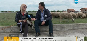 """""""Пълен абсурд"""": Следователка от Молдова пасе овце в пловдивско село"""