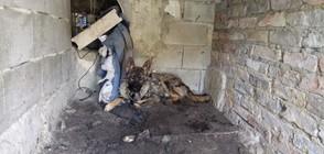 Разбиха нелегален кучкарник на ужасите край Варна (ВИДЕО+СНИМКИ)