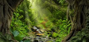 Пенсионер се изгуби в джунглата и оцеля цяла седмица, хранейки се с жаби