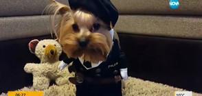 Кучета в смешни костюми (ВИДЕО)