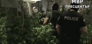 Удариха наркобанда от ММА бойци (ВИДЕО)